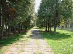 雑木林。2005年5月撮影