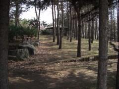 東屋への雑木林。2008年4月撮影